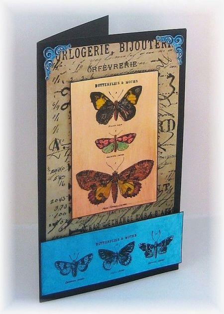tim butterfly 1