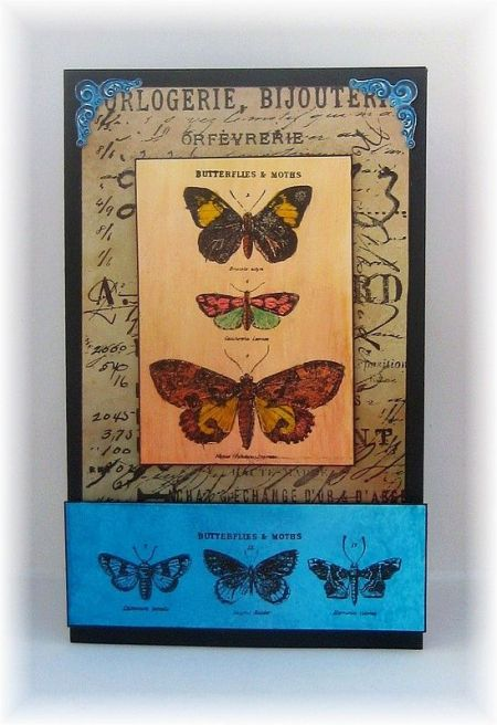 tim butterfly 2