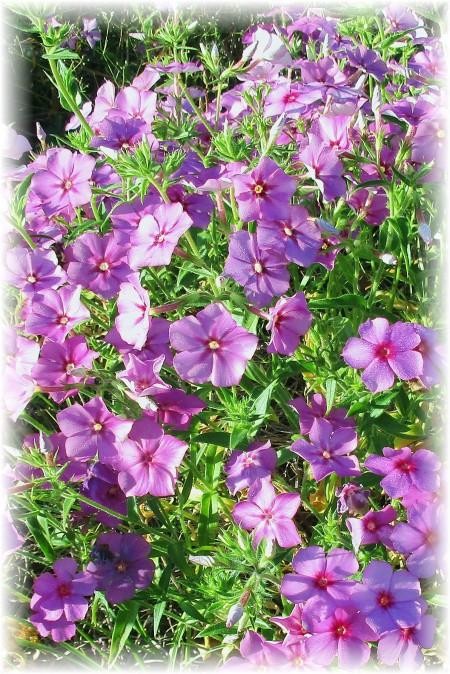 ditch flowers close purple